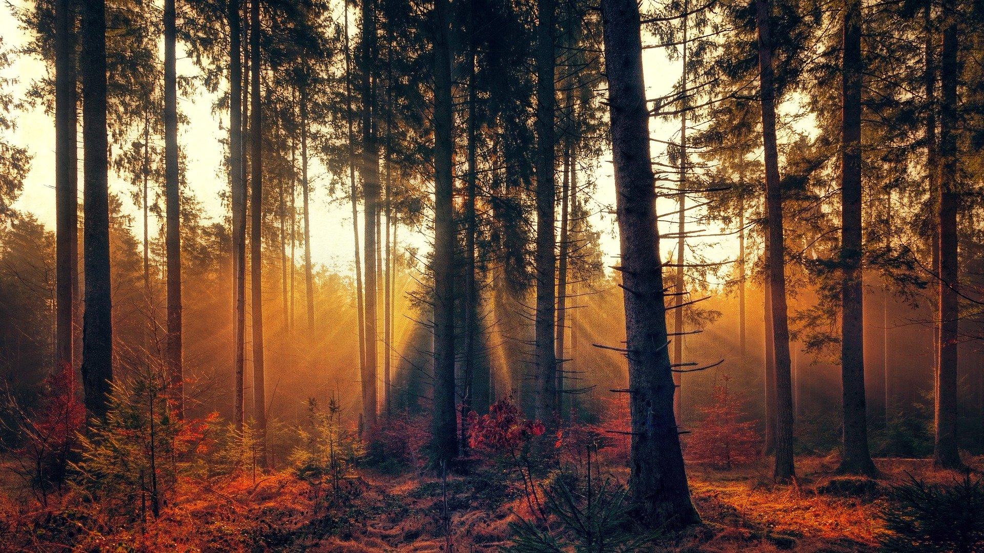 GFF Groupement foncier forestier